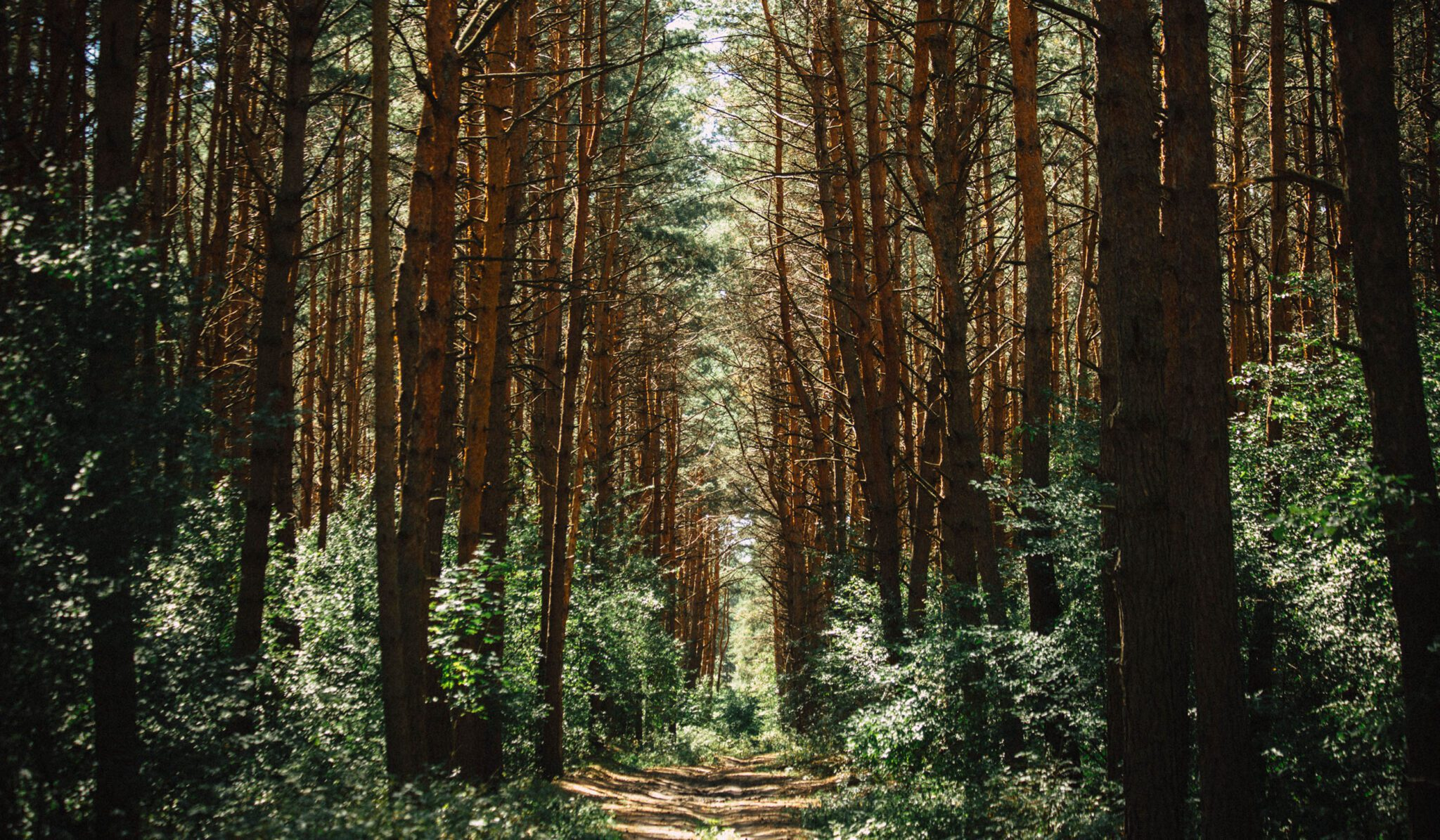 forest path representing infertility treatment journey